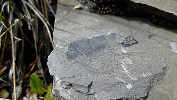 fossil2.jpg