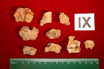 pterosaur-bones350x255.jpg