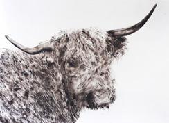 black-cow-sheila-gallagher-244.jpg