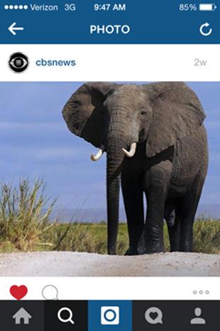 instagram-elephant-310w.jpg