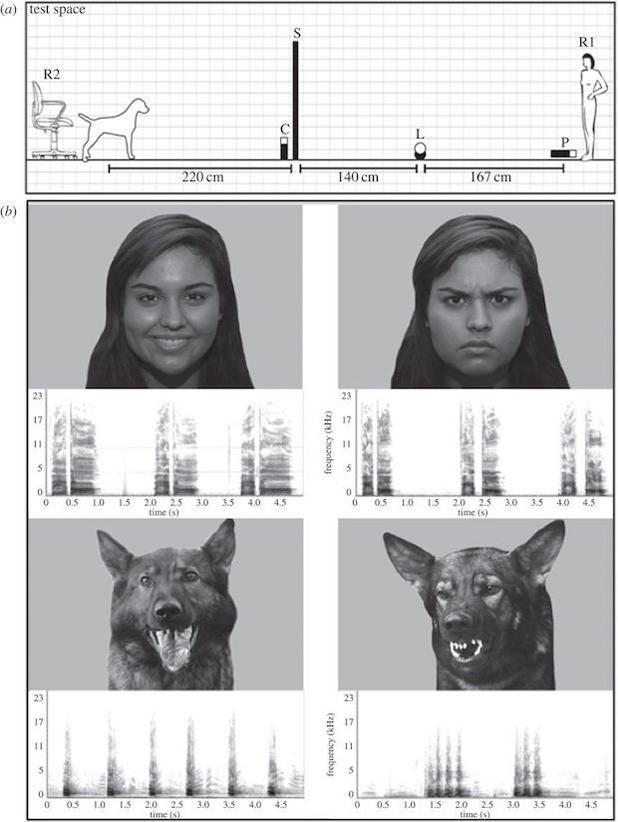 dogs-human-emotion-resized.jpg