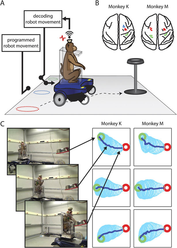 Device lets monkeys control wheelchair with their minds