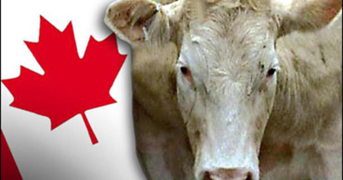 Mad Cow Keeps Canada Beef Out Of U S Cbs News
