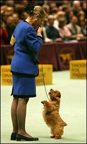 Dog Show 2004 Photo 1 Pictures Cbs News