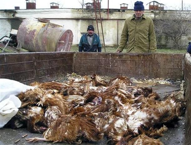 Bird Flu Spreads Across Europe