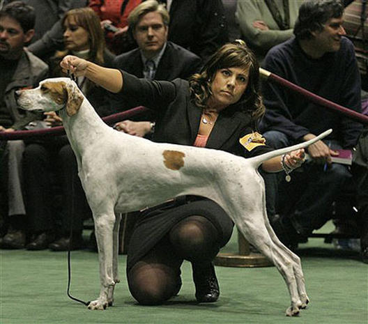 2007 Westminster Dog Show