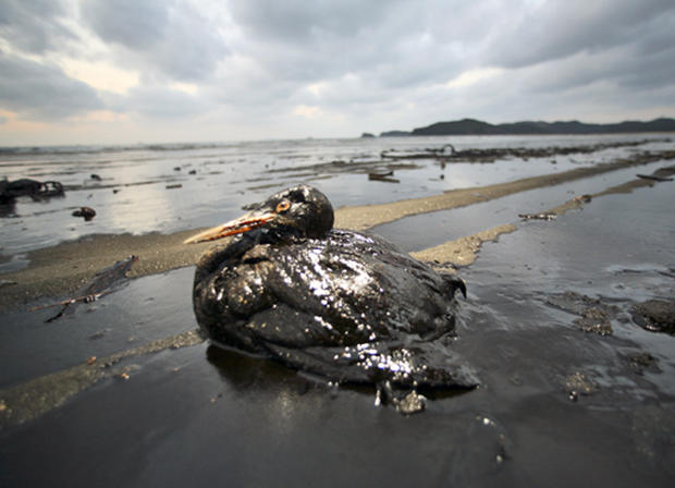 South Korean Oil Spill