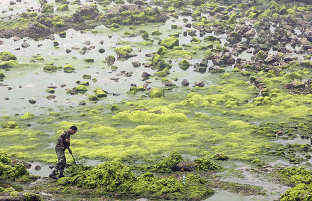 Green With Algae