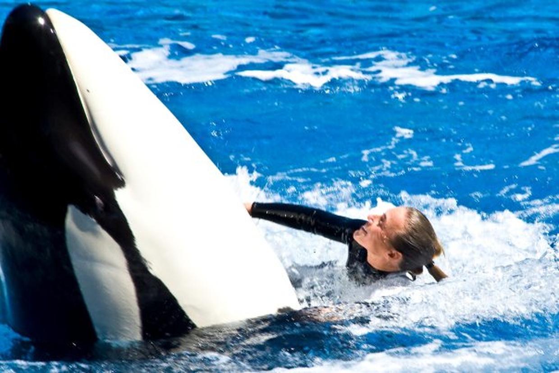 killer whale attacks - HD1240×827