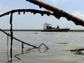 A Greenpeace boat is framed by oil-soaked cane near the mouth of the Mississippi River south of Venice, La. Wednesday, May 19, 2010.