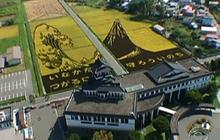 Stunning Fields of Rice Art
