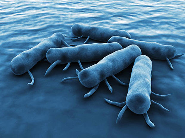 9 Signs of Salmonella Poisoning - 9 Signs of Salmonella ...