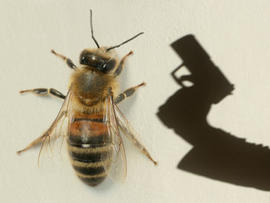 Honeybee Gunman? Police Hunt Ill. Shooter Who Asked About Bees