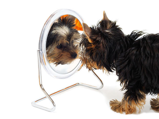Is Your Dog Crazy? 15 Nutty Behaviors Explained