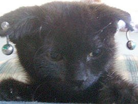 """""""Gothic Kittens"""" Cruelty Case: Seller Wants to Groom Pets Again"""