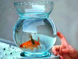 Robber Killed Goldfish, Didn't Want to Leave Witness, Say Cops