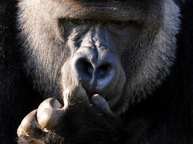 Nature's 5 smartest animal species