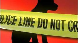 Generic police tape at puppy crime scene.