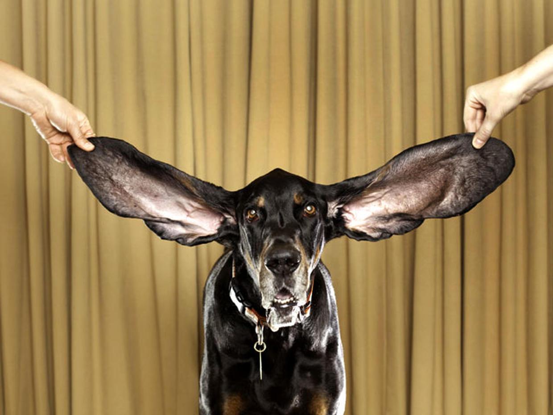 Фото самий болшой уши человека в мире 4