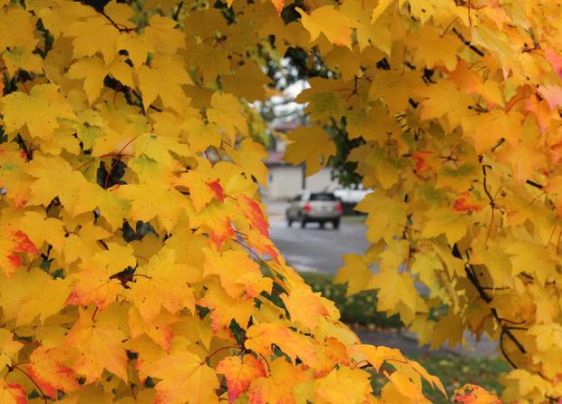 2011 fall foliage arrives