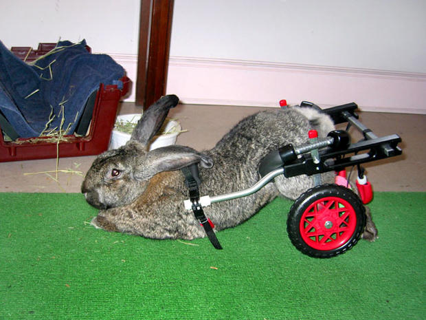 Paralyzed pets rock their wheels: 30 awesome animals