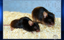 Researchers find clues to aging process