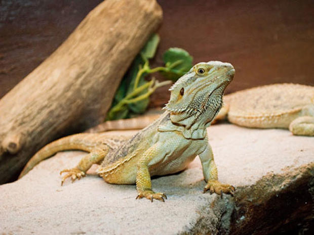 Unusual pets that are legal to own