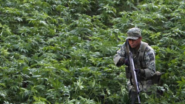 Mexico, marijuana, drug war, drug trade, cartel, army, Culiacan