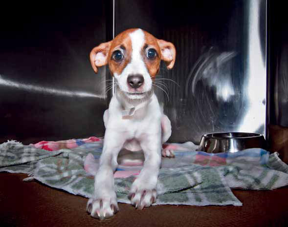 Tragic animal shelter portraits