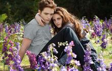 Fall films 2012