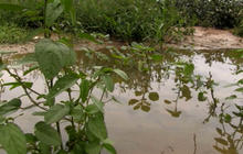 Isaac rainfall not welcome in some drought-hit areas