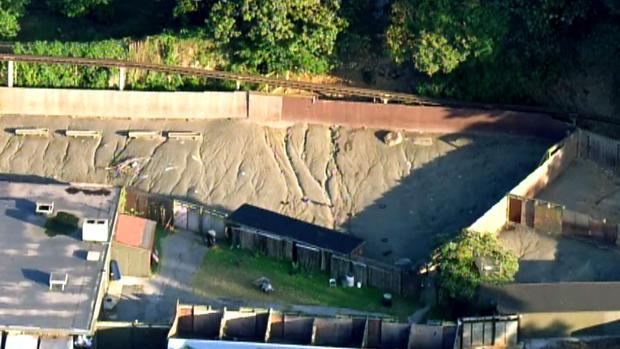 人在布朗克斯动物园的老虎小室跳跃后被mauled