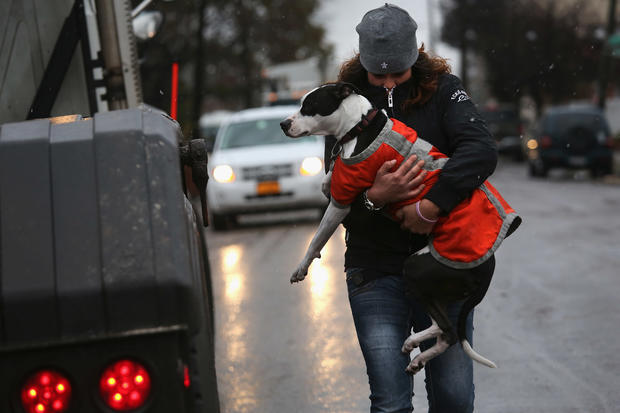 Pets rescued from superstorm