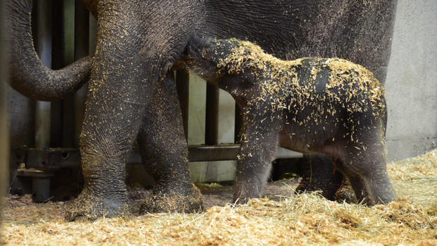 Elephant born at Oregon Zoo