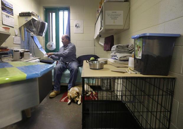 Prison puppies