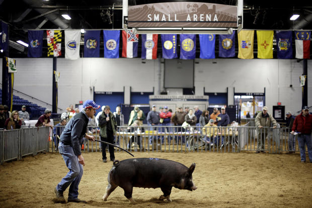 Pa. farm show draws crowd