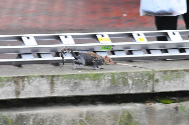 U.K. fire brigade rushes to squirrel's rescue