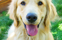 Longest study of dog cancer ever conducted