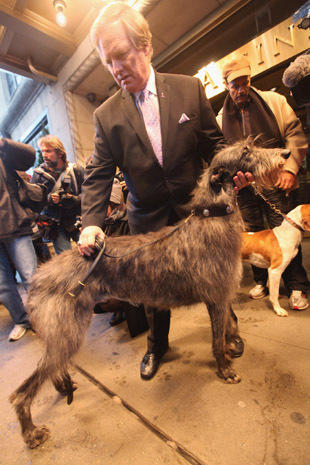 """Westminster Dog Show figure introduces 2 new dogs on """"CTM"""""""