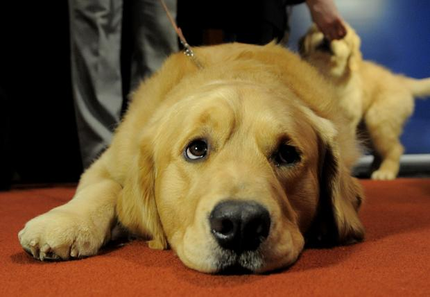 Most popular dog breeds in the U.S.