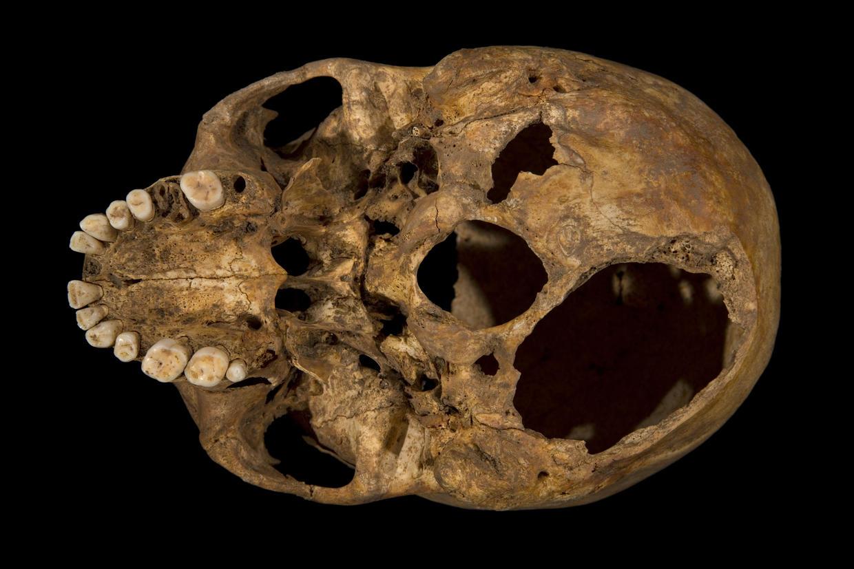 King Richard III 3D PRINTED replica skeleton goes on
