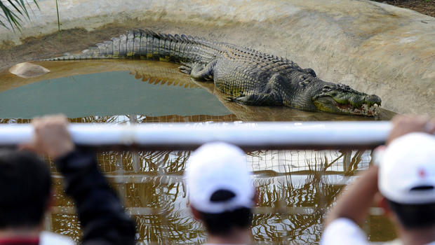 Lolong, the world's largest captive crocodile, dies in the ...
