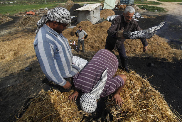 In Gaza, wood is turned to charcoal