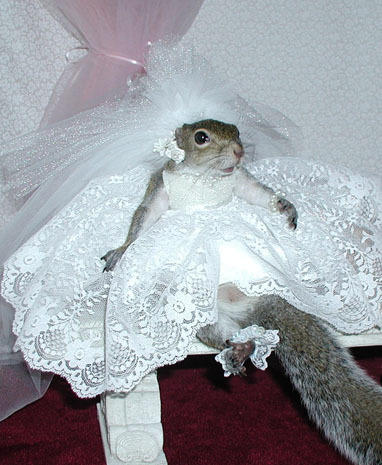 The most photographed squirrel in the world