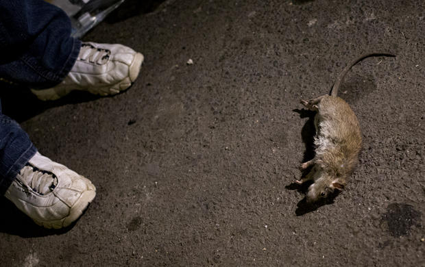 Urban rat catchers club