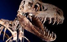 How do you smuggle 70 million-year-old dinosaur bones?
