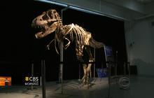 Smuggled dinosaur skeleton heading home to Mongolia