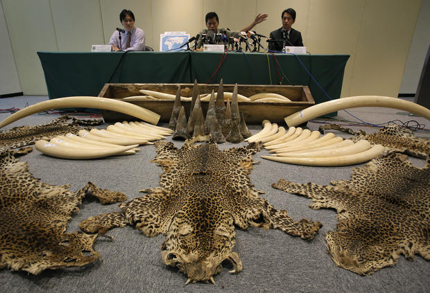 Illegal ivory, skins and horns seized in Hong Kong