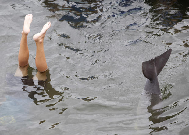 Dolphins imitate human actions