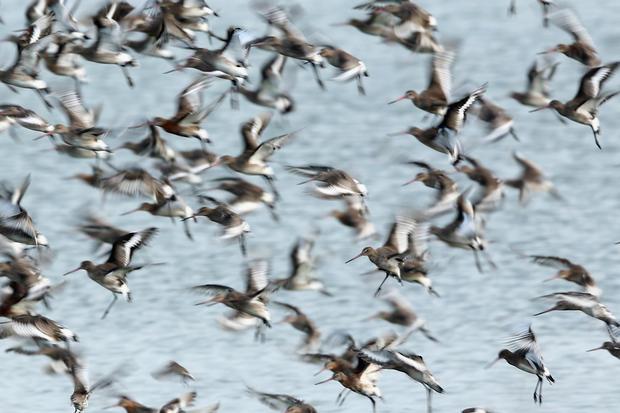 Seabirds create beautiful spectacle